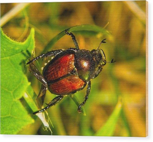 Beetle Take-off Wood Print by Pradeep Bangalore