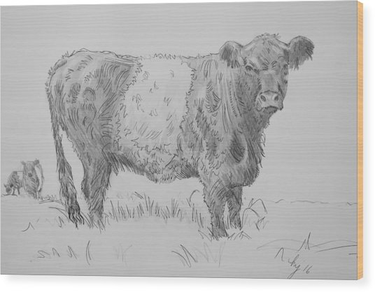 Belted Galloway Cow Pencil Drawing Wood Print