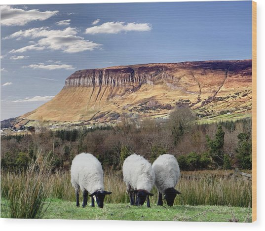 Benbulben, Co. Sligo - Sheep Grazing At The Base Of The Mountain On A Sunny Spring Day Wood Print