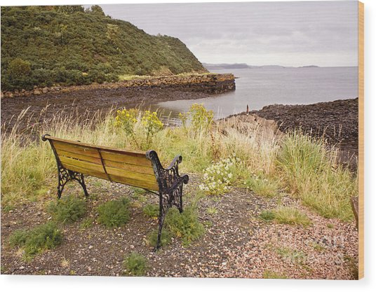 Bench At The Bay Wood Print