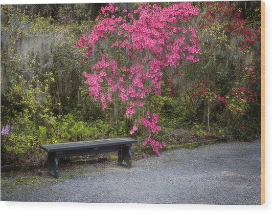 Bench In Azalea Garden Wood Print