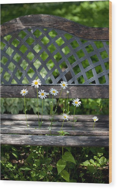 Benched Wood Print