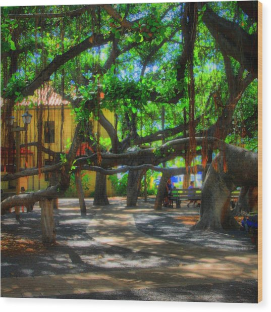 Beneath The Banyan Tree Wood Print