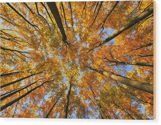 Beneath The Canopy Wood Print