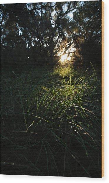 Beneath The Oaks Wood Print by Robin Street-Morris