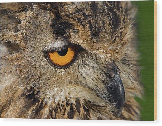 Bengal Eagle Owl Wood Print