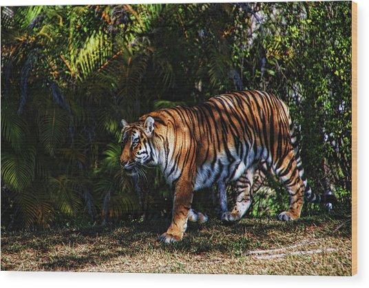 Bengal Tiger - Rdw001072 Wood Print