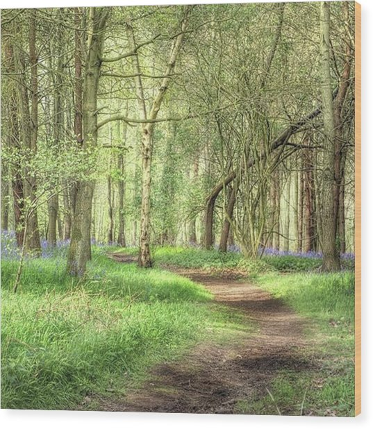 Bentley Woods, Warwickshire #landscape Wood Print