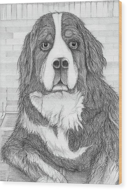 Bernese Mountain Dog  Wood Print