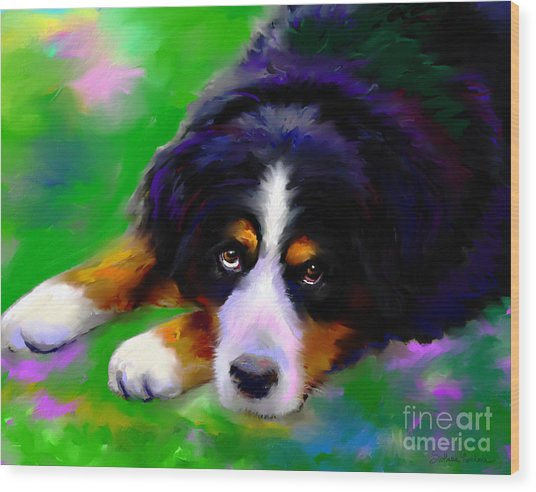 Bernese Mountain Dog Portrait Print Wood Print