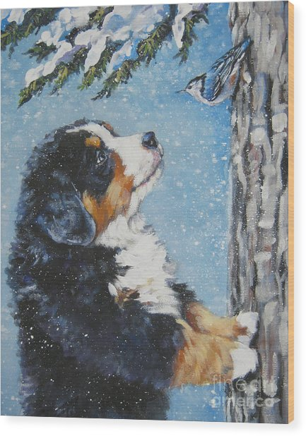 bernese Mountain Dog puppy and nuthatch Wood Print