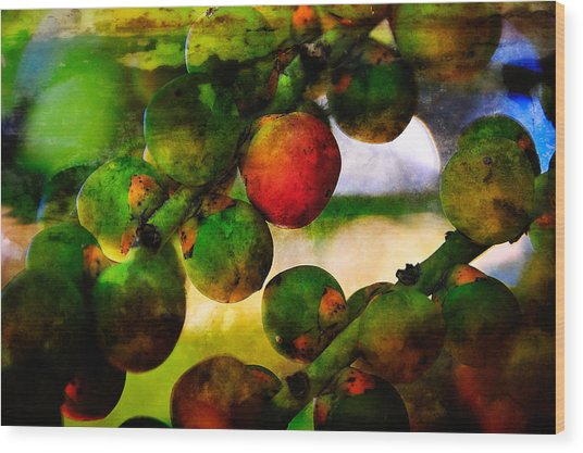 Wood Print featuring the photograph Berries by Harry Spitz
