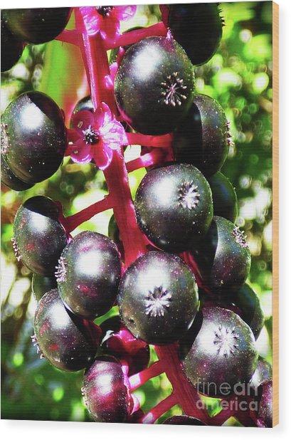 Wild Purple Pokeweed Berries  Wood Print