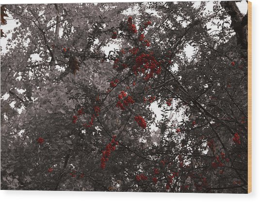 Berry Trees Wood Print by Bill Ades