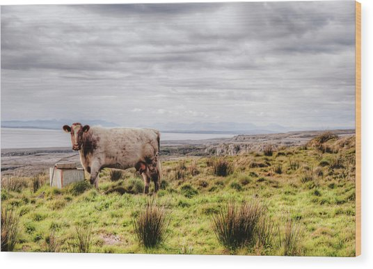 Besty My Irish Cow Wood Print
