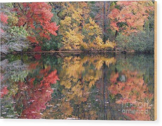 Betty Allen's Vibrant Colors Wood Print