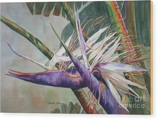 Betty's Bird - Bird Of Paradise Wood Print