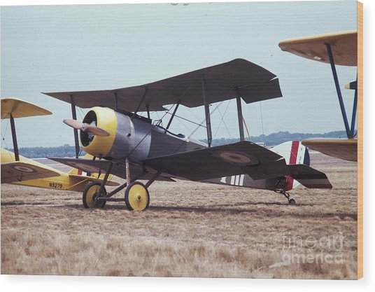 Bi-wing-4 Wood Print