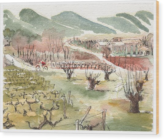Bicycling Through Vineyards Wood Print