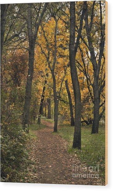 Bidwell Park Fall Wood Print by Richard Verkuyl