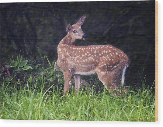 Big Bambi Wood Print