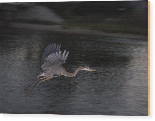 Big Blue Heron In Flight-debbie-may Wood Print by Debbie May