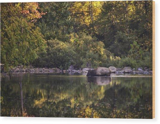 Big Bull In Buffalo National River Fall Color Wood Print