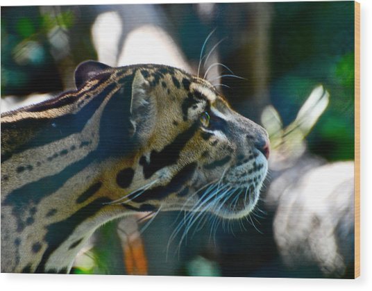 Big Cat Wood Print by Gene Sizemore