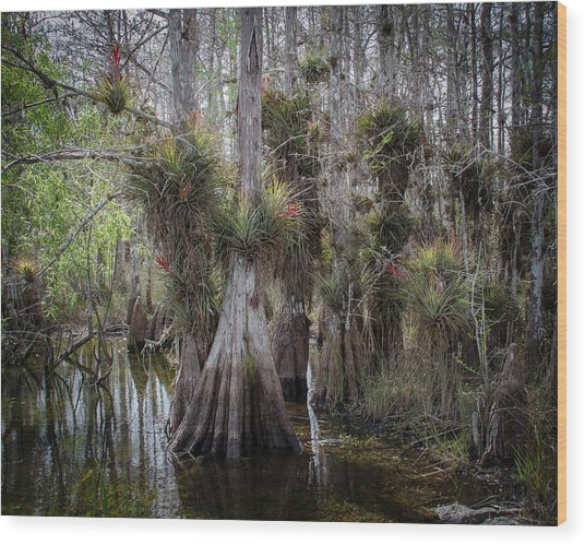 Big Cypress Preserve Wood Print