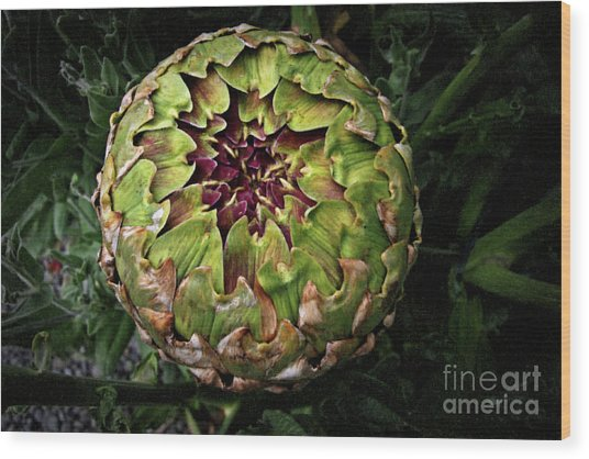 Big Fat Green Artichoke Wood Print