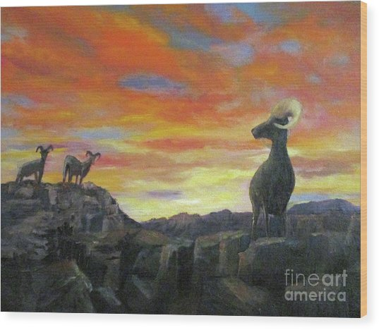 Big Horn Sheep At Sunset Wood Print