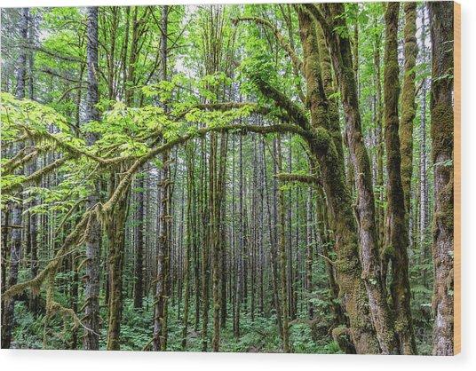 Big Leafe Maples Wood Print