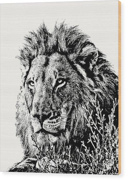 Big Male Lion Portrait Wood Print