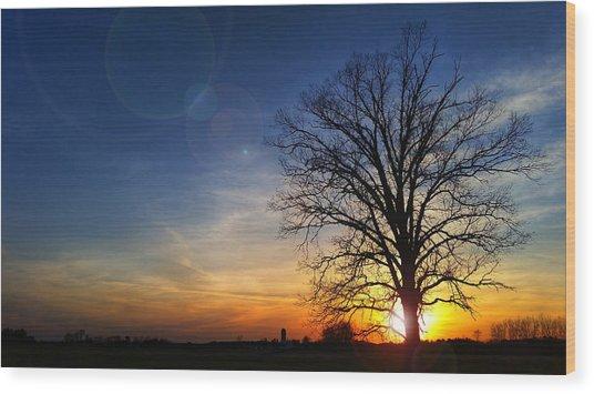 Big Oak Splendor Wood Print
