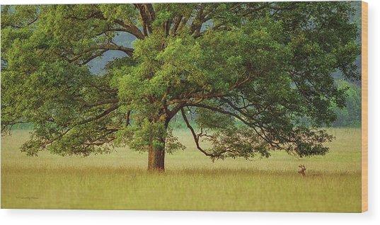 Big Oak Wood Print