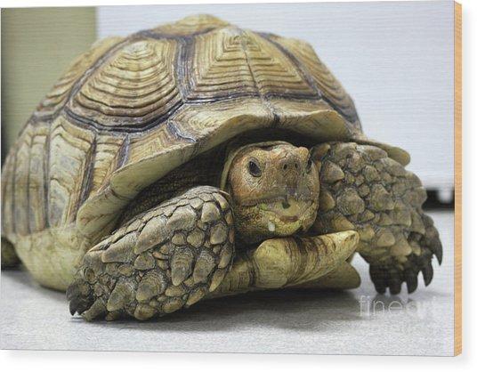 Big Ol Turtle Wood Print