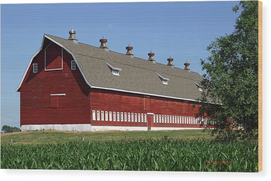 Big Red Barn In Spring Wood Print