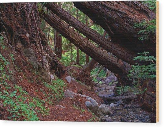 Big Sur Redwood Canyon Wood Print