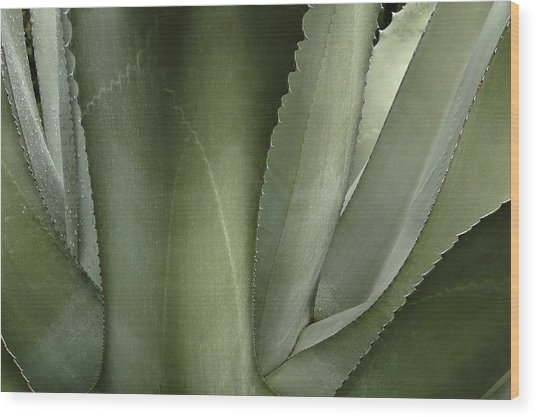 Big Sur Succulent Wood Print