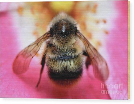 Big Time Bee Close Up Wood Print by Terry Elniski