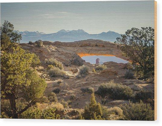 Bighorn Sheep And Mesa Arch Wood Print