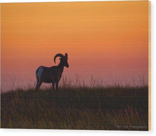 Bighorn Sunset Wood Print