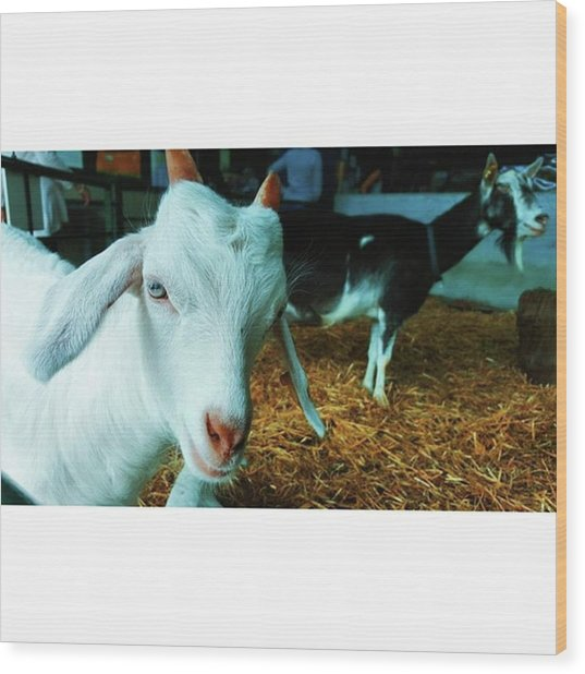 #billygoat #farm #sussex #animals Wood Print by Natalie Anne