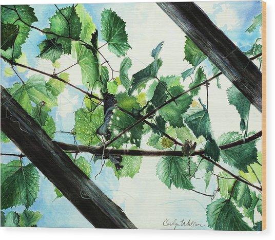 Biltmore Grapevines Overhead Wood Print