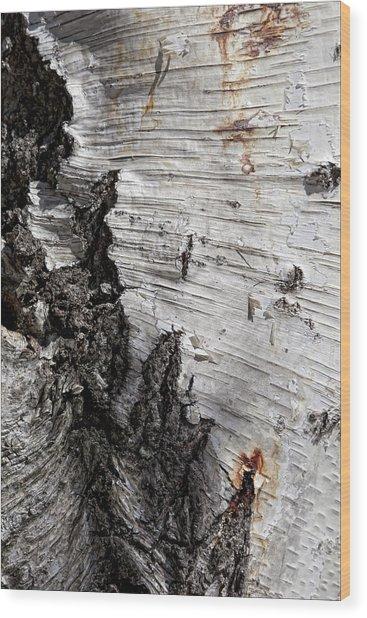 Birch Bark Wood Print