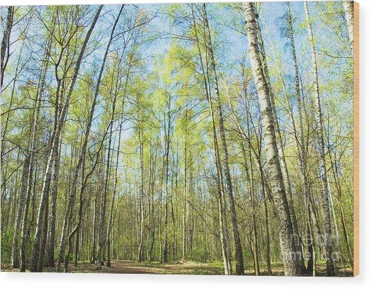 Birch Forest Spring Wood Print