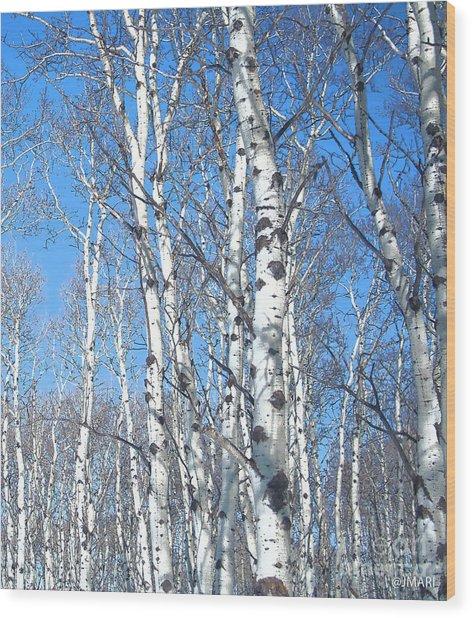 Birch Sky Wood Print