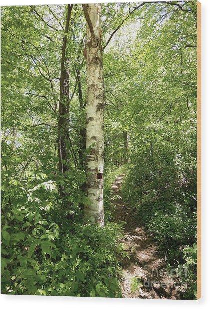 Birch Tree Hiking Trail Wood Print