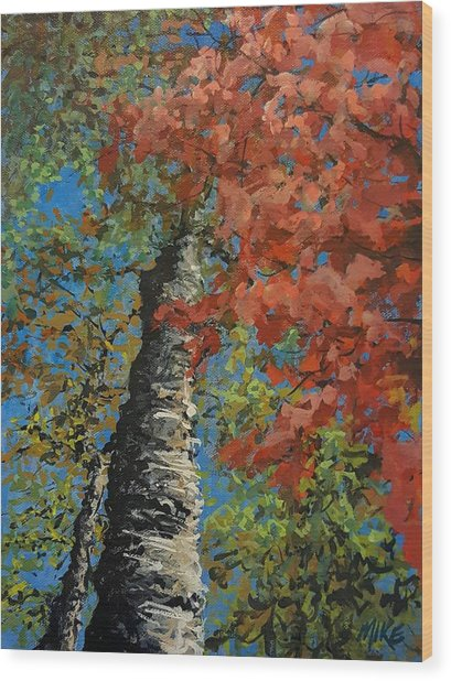 Birch Tree - Minister's Island Wood Print