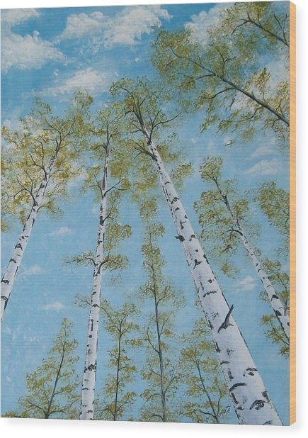 Birch Trees And Sky Wood Print